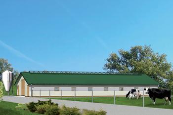 Obora dla 39 krów mlecznych, uwięziowa,  (stanowiskowa) na płytkiej ściółce