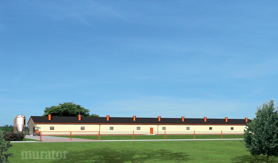 T14 Tuczarnia dla 1260 sztuk, na rusztach